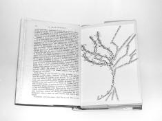 L'arbre à mot, par Abdellaziz