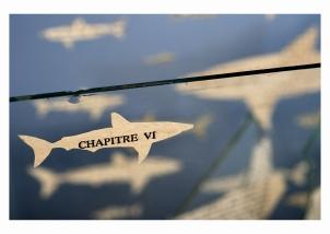 45 Chapitre VI - © B. Runtz
