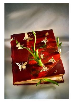 47 le livre aux papillons - © B. Runtz