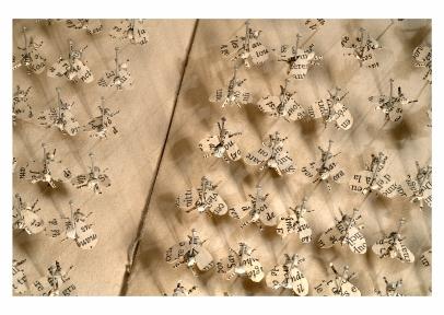 40 Pattes de mouches - © B. Runtz