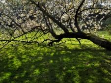 15 Même à terre, je refleurirai pour toi...- atelier du 13 avril - © B. Runtz